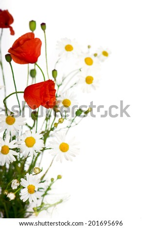 Poppy and chamomiles flowers isolated on a white background  - stock photo