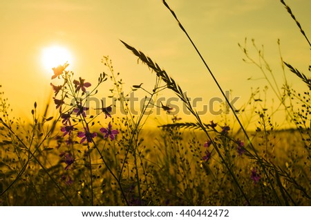 Poppy, cornflowers and rapeseed in the field. Blooming wildflowers. Red and blue flowers - stock photo
