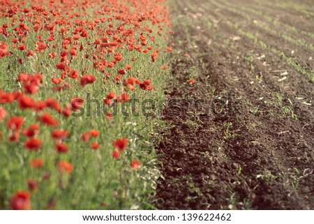 Poppy field near cultivated land