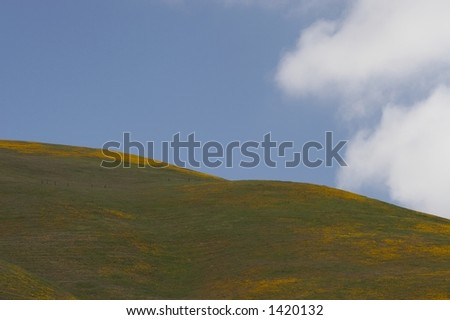 poppy flower field with cloudy sky - stock photo