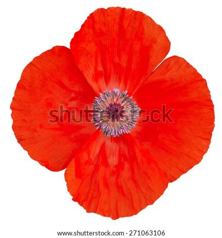 Poppy Flower. Remembrance Day - stock photo