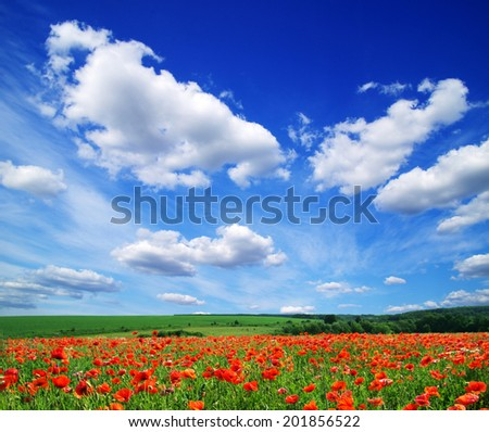 poppy flowers against the blue sky - stock photo