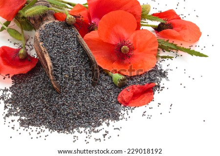 Poppy flowers and poppy seeds  in wooden scoop. Isolated on white background. - stock photo