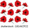 Poppy seamless pattern - stock photo