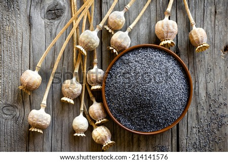 Poppy seeds - stock photo