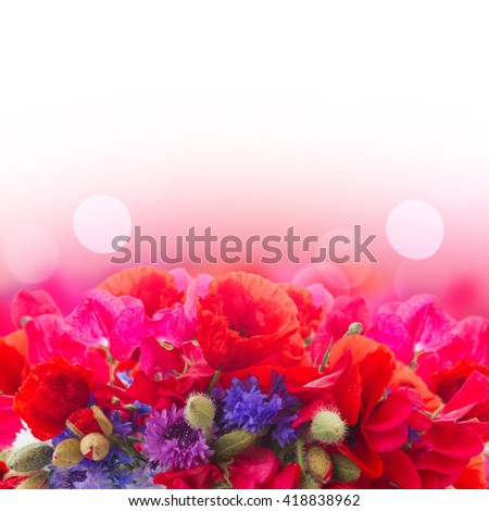 Poppy, sweet pea and corn flowers border   over white background - stock photo