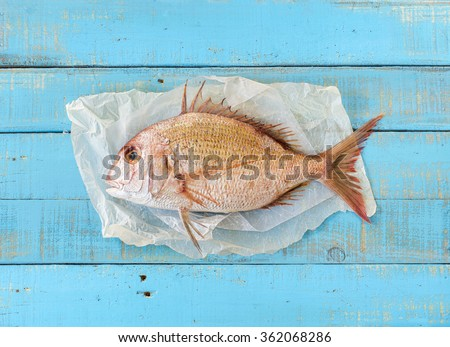 Porgy fish (Pagrus pagrus), also known along the Gulf Coast as white Snapper, on a mediterranean blue wooden table. - stock photo