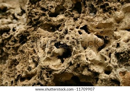 Porous Stone - stock photo