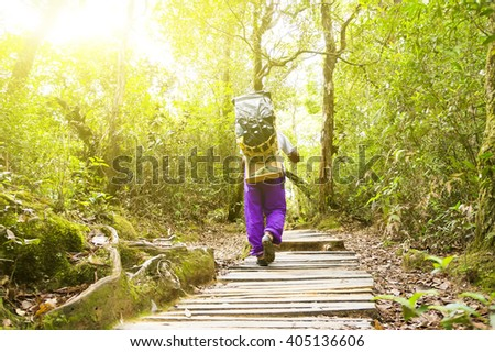 Porter in a nature green forest with sunny light morning - stock photo