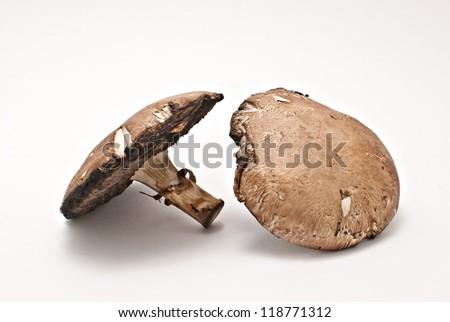 portobello fungi - stock photo