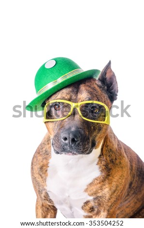 Portrait American Staffordshire Terrier in green hat glasses before white background.