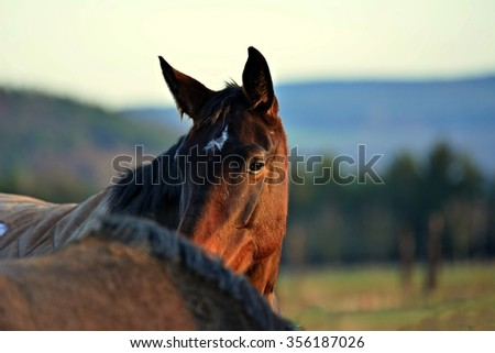 Portrait brown horse