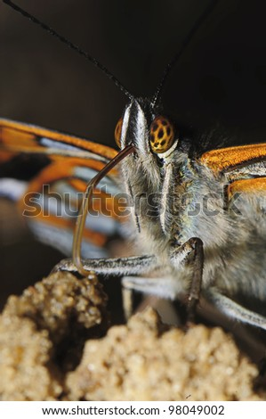 portrait butterfly - stock photo