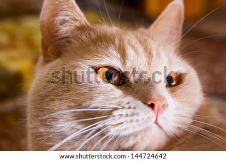 Portrait Cat - stock photo