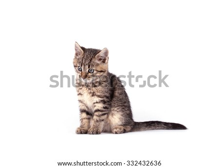 Portrait  cat isolated on white background