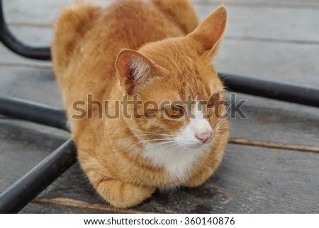 Portrait Cat under chair - stock photo