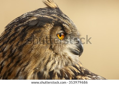 portrait eagle owl very close up - stock photo