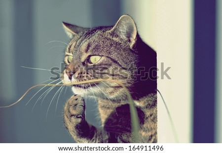 Portrait funny cat - stock photo