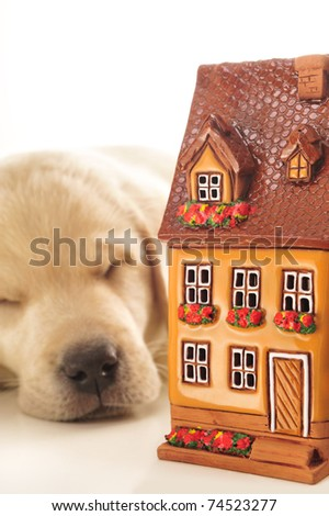 Portrait of a adorable labrador puppy, laying on white table with house. Safe home concept - stock photo