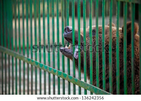 portrait of a bear in a cage close up - stock photo