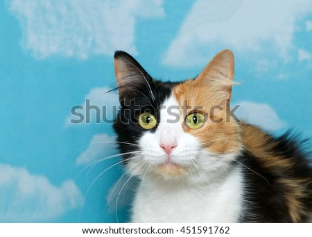 Portrait of a beautiful calico cat blue background cloud pattern with copy space - stock photo