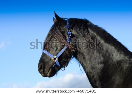 Portrait of a beautiful horse. - stock photo