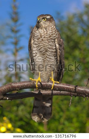 Portrait of a bird of prey on a tree branch - stock photo