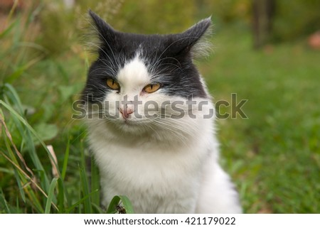 Portrait of a black and white cat wild