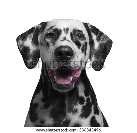 Small Black Dog Smiling With Big White Teeth