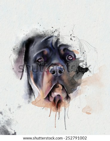 Portrait of a black Mastiff on a white background - stock photo