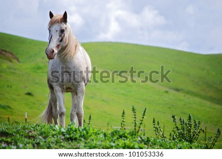 Portrait of a Blue-eyed Tennessee Walker Gelding against stormy sky - stock photo