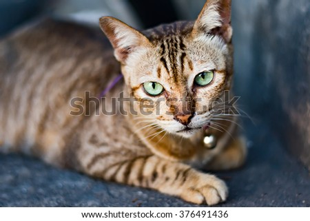 Portrait of a brown cat with green eyes staring at camera - stock photo
