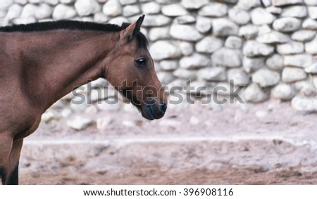 Portrait of a brown horse in profile, background stone wall, empty space for text - stock photo