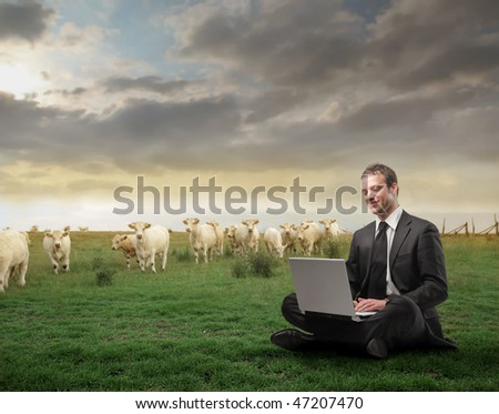 Portrait of a businessman sitting on a green meadow full of animals and using a laptop - stock photo