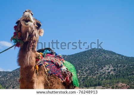 Portrait of a camel - stock photo