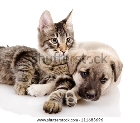 Portrait of a cat and dog. Isolated on a white background - stock photo