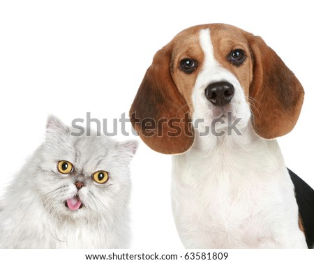 Portrait of a cat and dog on a white background - stock photo