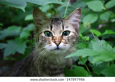 Portrait of a cat in a grass