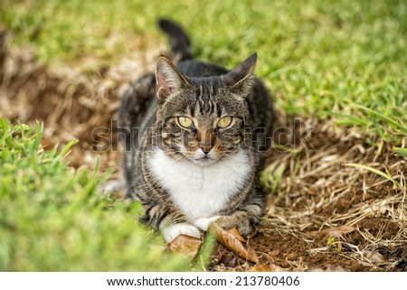 portrait of a cat looking at you on the grass background