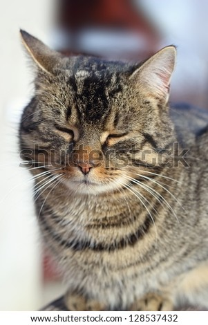 portrait of a cat relaxing in a cold winter day - stock photo