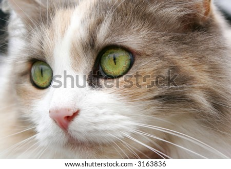 Portrait of a cat with green eyes