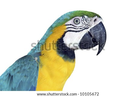 Portrait of a colorful, isolated Macaw
