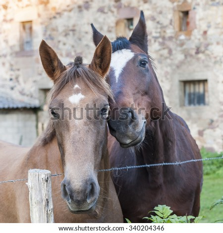 Portrait of a couple of horses in friendly attitude - stock photo