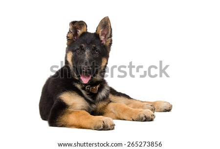 Portrait of a curious German shepherd puppy lying isolated on white background - stock photo