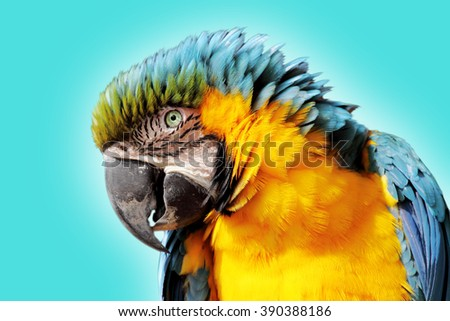 Portrait of a cute and colored parrot