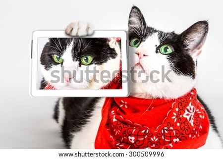 Portrait of a cute cat wearing a red bandana, white studio background.