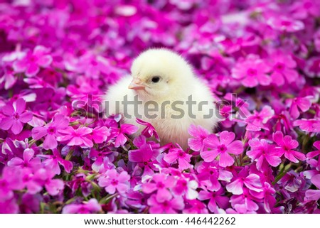 Portrait of a cute little chicken in the garden - stock photo
