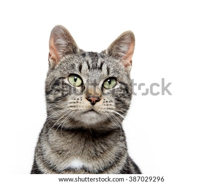 Portrait of a cute tabby cat isolated on white background