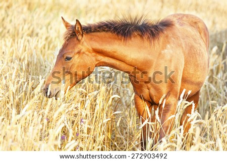 Portrait of a cute young foal. - stock photo
