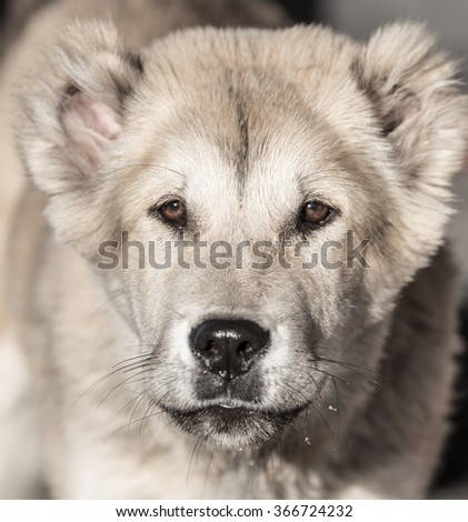 Portrait of a dog on the nature - stock photo